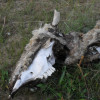 Мурманские зоотехники бастуют из-за голодных коров